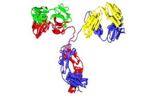 Medium-throughput Antibody Production