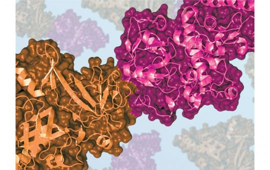 Why Proteos?  Reliable Recombinant Protein Services